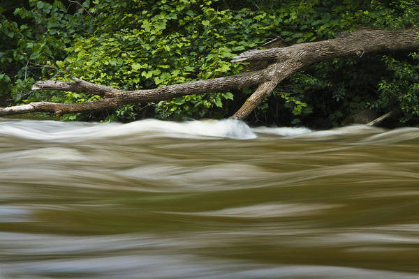 Photograph - Water Flowing By A Tree Branch On The Thornapple River by Randall Nyhof