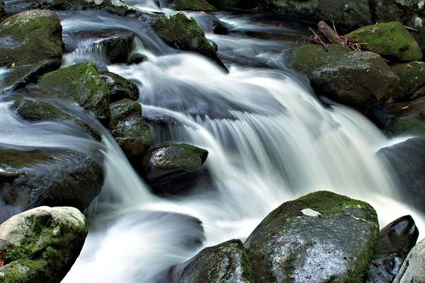 Photograph - Water Flowsthrough The Mountains by Carol Montoya