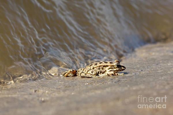 Water Frog Close Up  Art Print