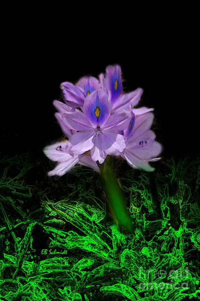 Digital Art - Water Hyacinth by E B Schmidt