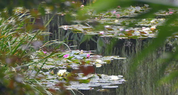 Claude Monet Photograph - Water Lilies At Monet's Home In Giverny by Carla Parris