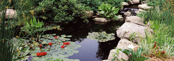 Peacefulness Photograph - Water Lilies In A Pond, Sunken Garden by Panoramic Images
