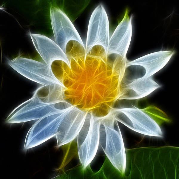 Photograph - Water Lily by Beth Sawickie