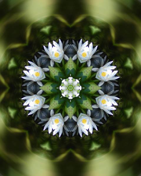 Water Lily Mandala Art Print by Peter Kallai