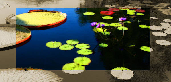 Photograph - Water Lily Pad Landscape by Patrick Malon