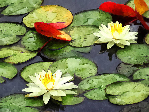 Photograph - Water Lily Pond In Autumn by Susan Savad