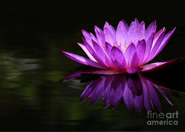 Photograph - Water Lily Reflection by Sabrina L Ryan