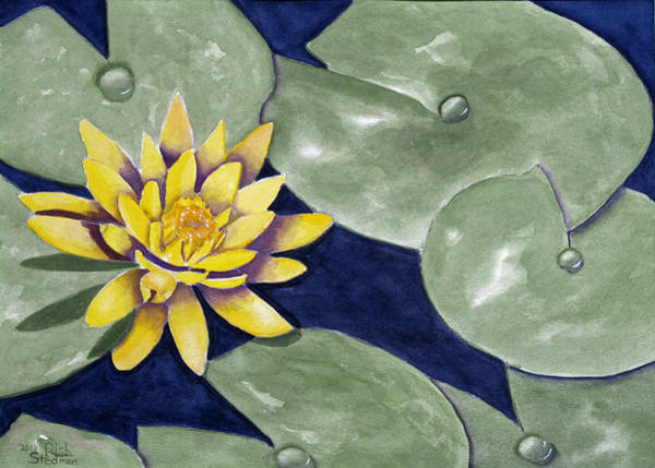 Painting - Water Lily by Rich Stedman