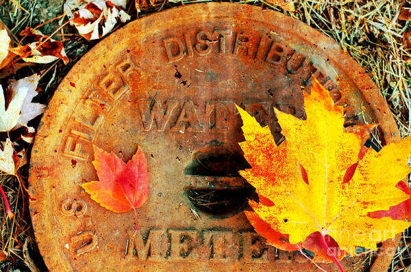 Photograph - Water Meter Cover With Autumn Leaves Abstract by Andee Design