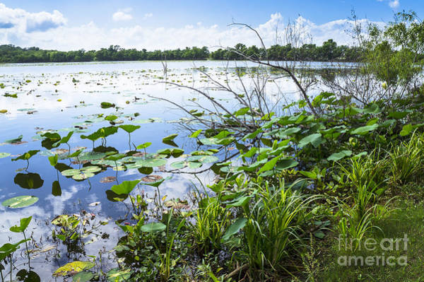 Brazos Bend State Park Wall Art - Photograph - Water Plants And Their Landscape by Ellie Teramoto