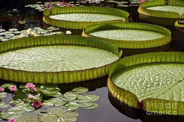 Photograph - Water Platter Charm by Byron Varvarigos