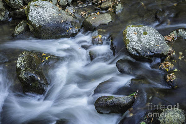 Photograph - Water Play by David Waldrop
