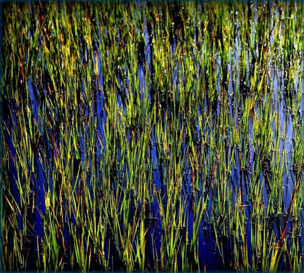 Wall Art - Photograph - Water Reeds by Karen Wiles