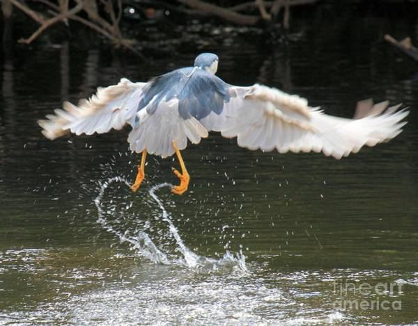 Photograph - Water Takeoff by Adam Jewell