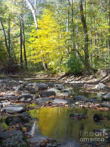 Photograph - Water Trail Mccormick's Creek State Park by Pamela Clements