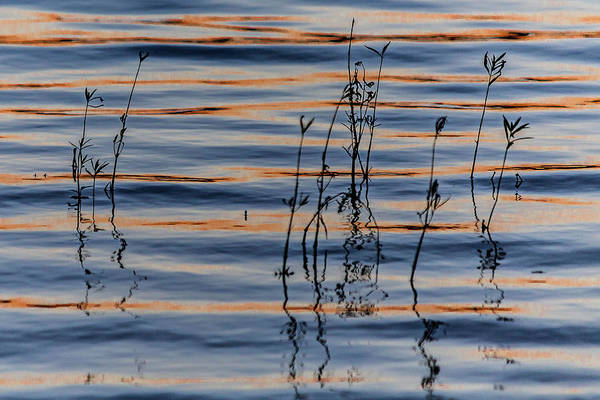 Photograph - Water Weeds by Karen Saunders