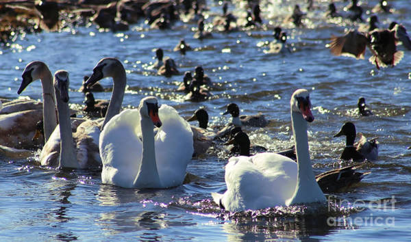 Photograph - Water Wildlife by Sue Harper