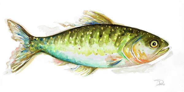 Wall Art - Painting - Watercolor Fish II by Patricia Pinto