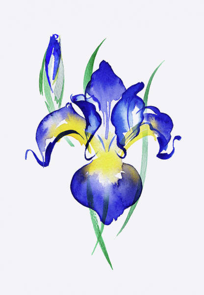 Wall Art - Painting - Watercolor Painting Of Blue Irises by Ikon Images