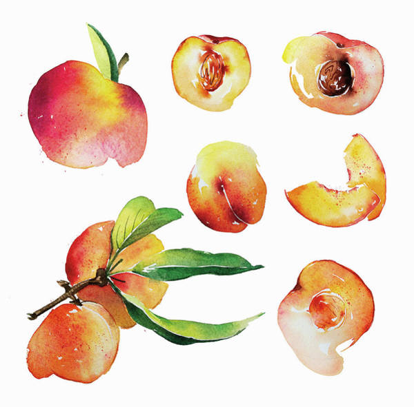 Wall Art - Painting - Watercolor Painting Of Fresh Peaches by Ikon Images