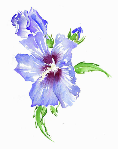Wall Art - Painting - Watercolor Painting Of Hibiscus by Ikon Images