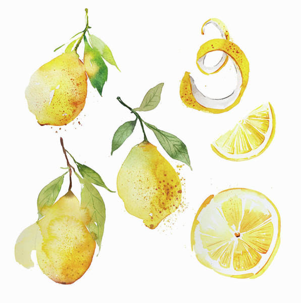 Wall Art - Painting - Watercolor Painting Of Lemons by Ikon Images