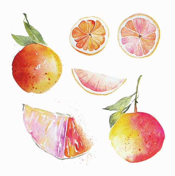 Wall Art - Painting - Watercolor Painting Of Pink Grapefruit by Ikon Images