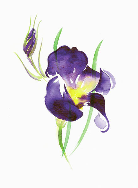 Wall Art - Painting - Watercolor Painting Of Purple Iris by Ikon Images