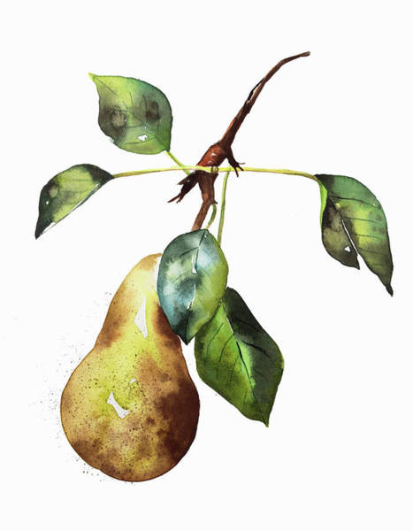 Wall Art - Painting - Watercolor Painting Of Ripe Pear On Twig by Ikon Images
