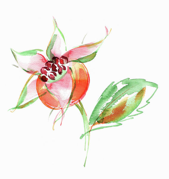 Wall Art - Painting - Watercolor Painting Of Rosehip by Ikon Images