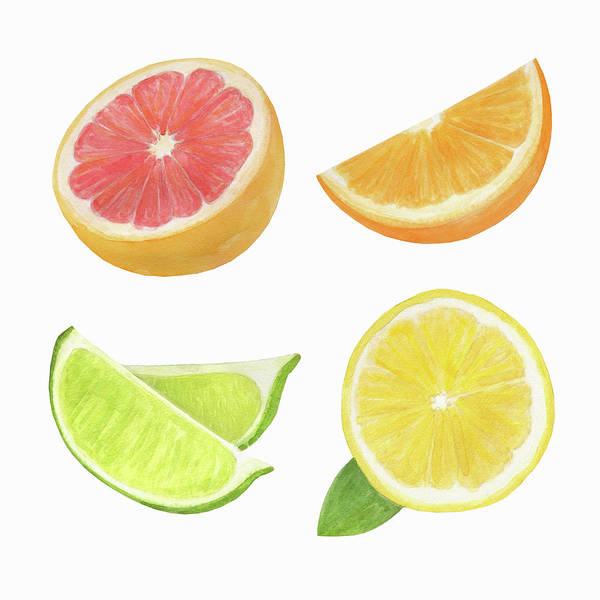 Wall Art - Painting - Watercolor Painting Of Slices Of Citrus by Ikon Images