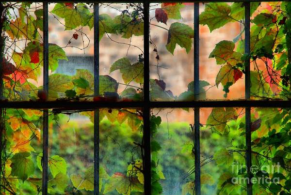 Photograph - Watercolor Windows by Adam Jewell