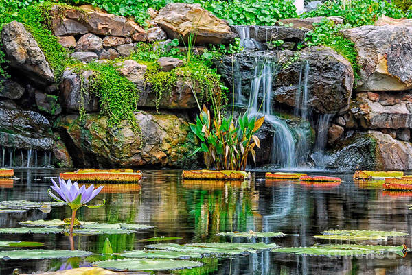 Photograph - Waterfall And The Water Lily by Paul Quinn