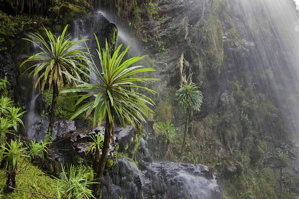 East Africa Wall Art - Photograph - Waterfall At Mount Stanley, Ruwenzori by Martin Zwick