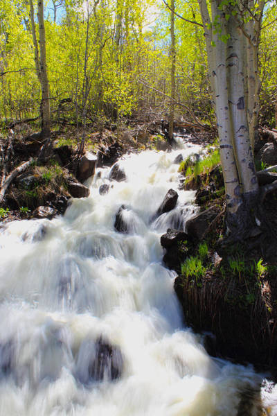 Photograph - Waterfall By The Aspens by Shane Bechler