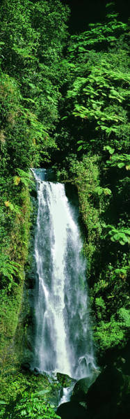Trafalgar Photograph - Waterfall In A Forest, Mother Falls by Panoramic Images
