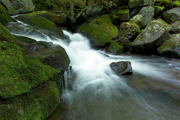 Freshwater Photograph - Waterfall, Middle Prong Trailhead by Maresa Pryor