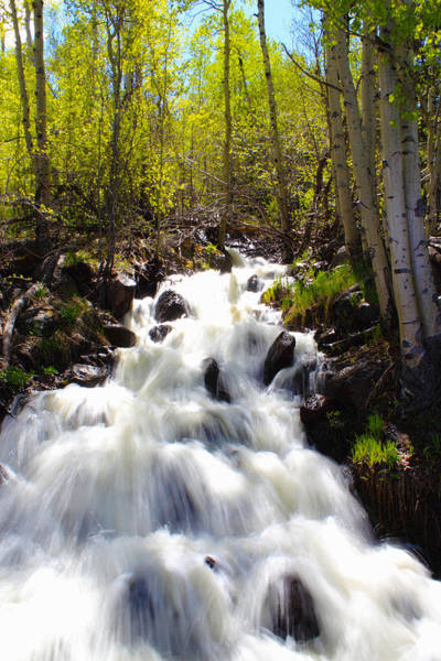 Photograph - Waterfall Through The Aspens by Shane Bechler