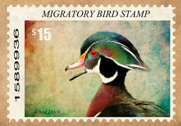 Wall Art - Photograph - Waterfoul Stamp by Steve McKinzie