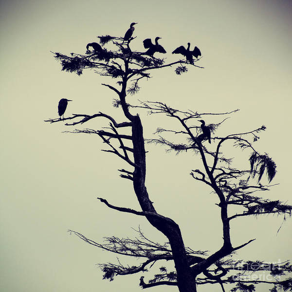 Photograph - Waterfowl Tree - Hipster Photo Square by Charmian Vistaunet