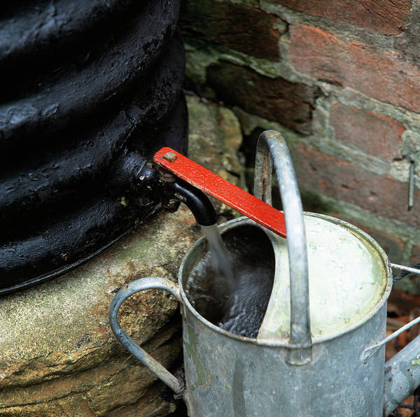 Pouring Photograph - Watering Can by Sheila Terry/science Photo Library