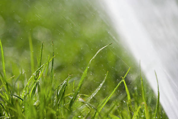 Drops Of Water Photograph - Watering The Grass by Gustoimages/science Photo Library