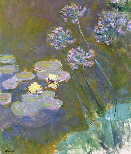 Lilly Pad Wall Art - Painting - Waterlilies And Agapanthus by Claude Monet