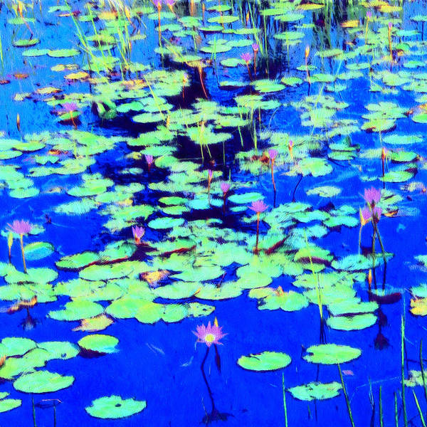 Painting - Waterlilies by Dominic Piperata