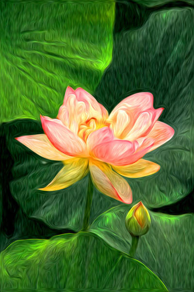 Wall Art - Photograph - Waterlilies by Richard Trahan