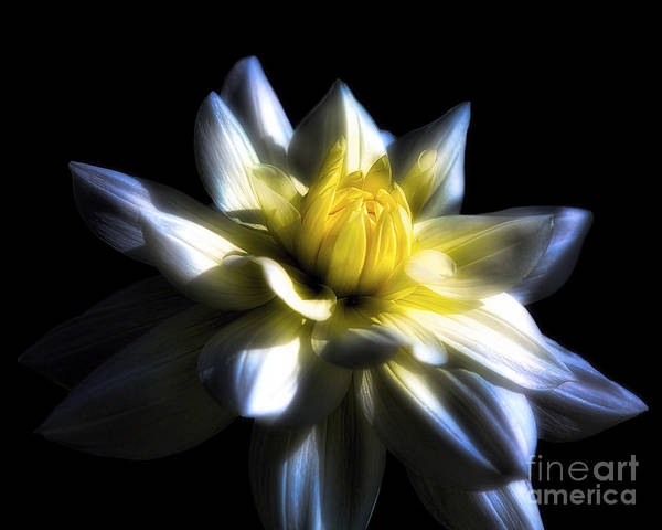 Wall Art - Photograph - Waterlily Dahlia I by George Oze