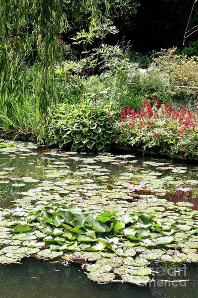 Wall Art - Photograph - Waterlily Pond Giverney by Christiane Schulze Art And Photography