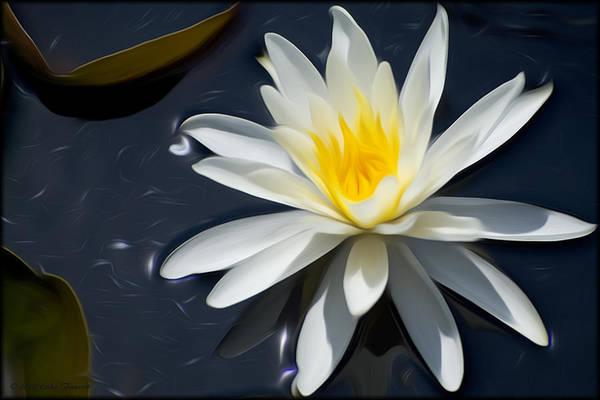 Photograph - Waterlily White by Erika Fawcett