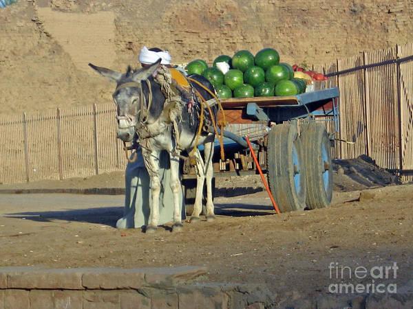 Watermellon Wall Art - Photograph - Watermellon Cart Karnac Egypt by Jay Milo
