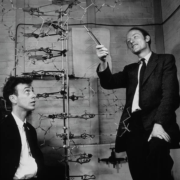 Wall Art - Photograph - Watson And Crick With Their Dna Model by A. Barrington Brown, Gonville And Caius College/science Photo Library